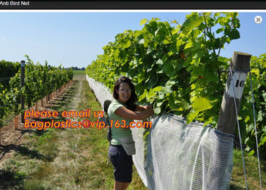 China Hot Selling Greenhouse Anti Insect Netting with Competitive Price,virgin hdpe anti insect net for agriculture, BAGPLASTI supplier