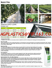China Mulch film,plant protect sleeve film w/hole,air-breath mulch film,silver,black, green,mulch film, pull-off hole,ldpe+lld supplier