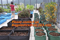 China vegetables, fruits, seeds, bedding plants, tomatoes, peppers, cucumbers, tree starters factory