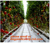 China Film Covering Tomato Planting Greenhouse,Tomato Greenhouse film, Plastic Polyethylene sheet 6 mil 4 year UV Resistant cr factory