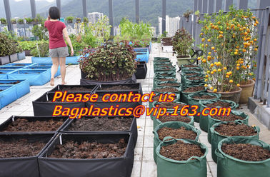vegetables, fruits, seeds, bedding plants, tomatoes, peppers, cucumbers, tree starters