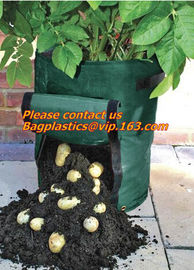vegetables, fruits, seeds, bedding plants, tomatoes, peppers, cucumbers, tree starters, potato bag, Hydroponics Garden